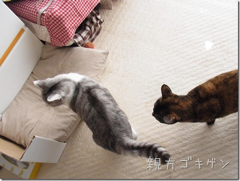R00140001_thumb-ナカヨシ。