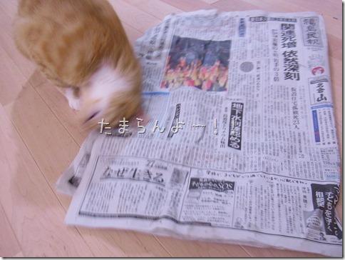 R0014306_thumb-福島からまたたび届く★