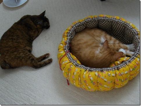 R0014427_thumb-杉並で迷子猫さんを捜しています/入荷でした。