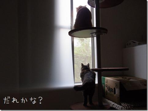 R0014437_thumb-ナカヨシ。