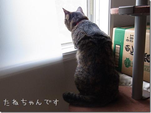R0014439_thumb-ナカヨシ。