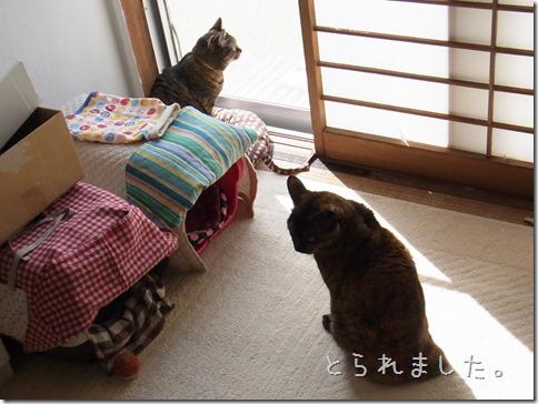R0014448_thumb-ナカヨシ。
