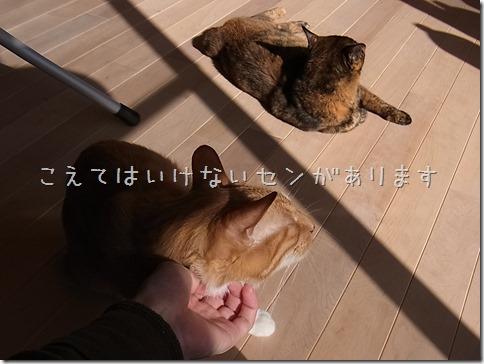 R0015471_thumb-本日の作業台・本日の茶色いフタリ
