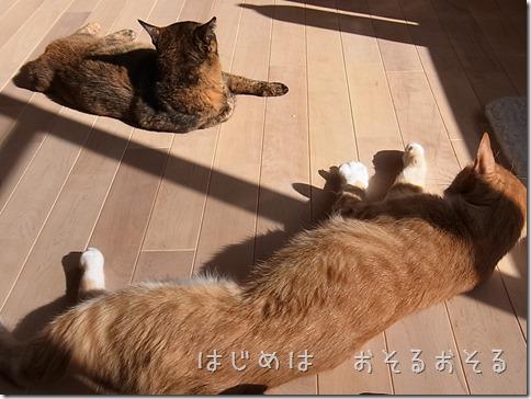 R0015472_thumb-本日の作業台・本日の茶色いフタリ
