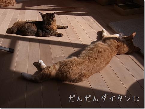 R0015476_thumb-本日の作業台・本日の茶色いフタリ