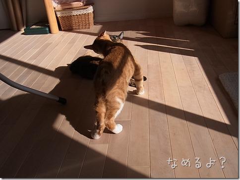 R0015483_thumb-本日の作業台・本日の茶色いフタリ