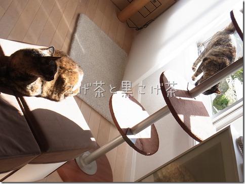 R0015816_thumb-定休日の猫ズ