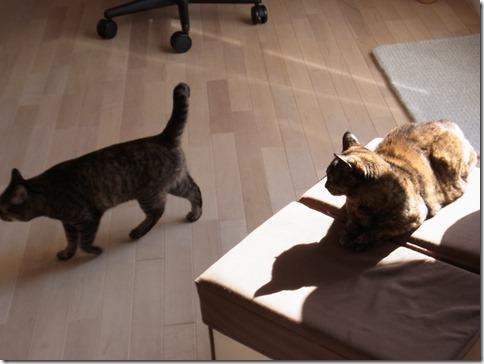 R0015819_thumb-定休日の猫ズ