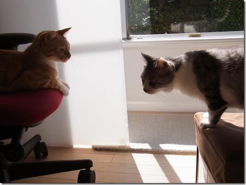 R0015829_thumb-定休日の猫ズ