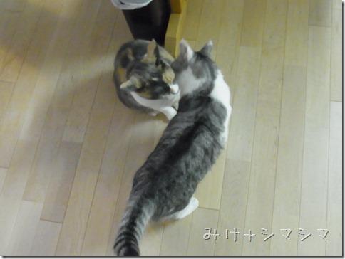 R0015833_thumb-定休日の猫ズ