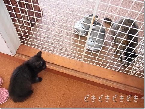 R00232441_thumb-隊長、巨大猫と対面する