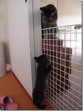 R00232711_thumb-隊長、巨大猫と対面する