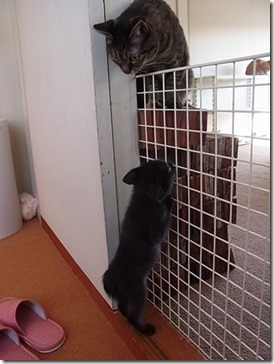 R00232831_thumb-隊長、巨大猫と対面する