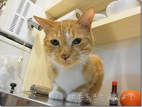 R0029052_thumb-ボールマスター★隊長/ちょっこり作業台