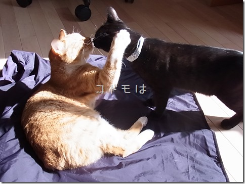 R0041835_thumb-ちゃっくんダイスキそして検品隊長・定休日の猫ズ/本日の作業台