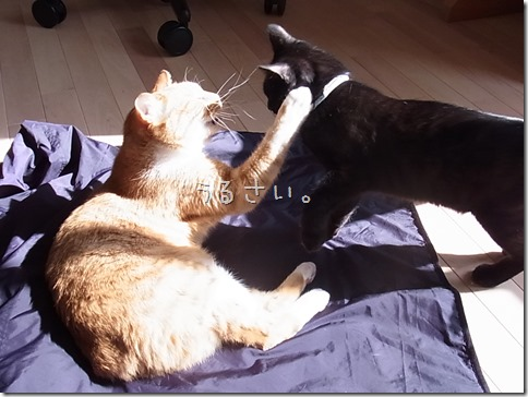 R0041837_thumb-ちゃっくんダイスキそして検品隊長・定休日の猫ズ/本日の作業台
