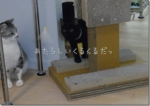 R0041872_thumb-ちゃっくんダイスキそして検品隊長・定休日の猫ズ/本日の作業台