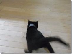 R0041880_thumb-ちゃっくんダイスキそして検品隊長・定休日の猫ズ/本日の作業台