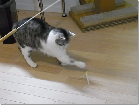 R0041898_thumb-ちゃっくんダイスキそして検品隊長・定休日の猫ズ/本日の作業台
