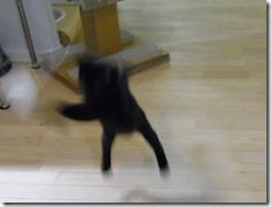 R0041966_thumb-ちゃっくんダイスキそして検品隊長・定休日の猫ズ/本日の作業台