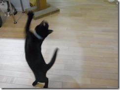 R0041969_thumb-ちゃっくんダイスキそして検品隊長・定休日の猫ズ/本日の作業台