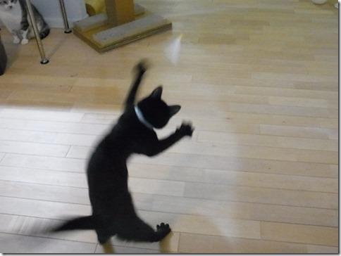 R0041970_thumb-ちゃっくんダイスキそして検品隊長・定休日の猫ズ/本日の作業台