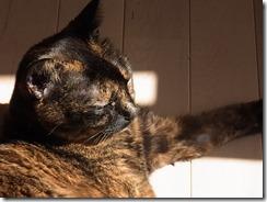 R0042051_thumb-洗面台の隊長★茶色いトリオのひなたぼっこ