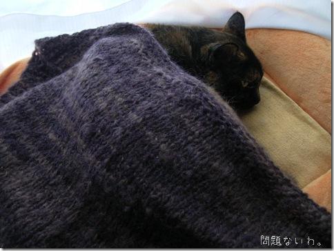 R0078797_thumb-さびたコ用♪さび柄毛布(自家用デス、スミマセン