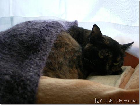R0078799_thumb-さびたコ用♪さび柄毛布(自家用デス、スミマセン
