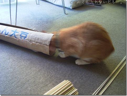 R0081481_thumb-適猫適所。