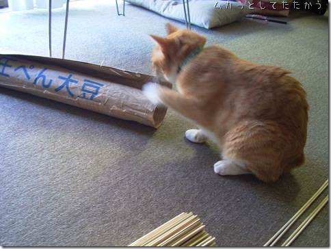 R0081482_thumb-適猫適所。