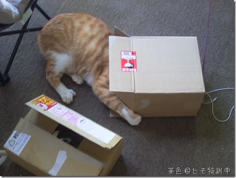 R0084180_thumb-ありがとうございます。・福袋など、いろいろ追加
