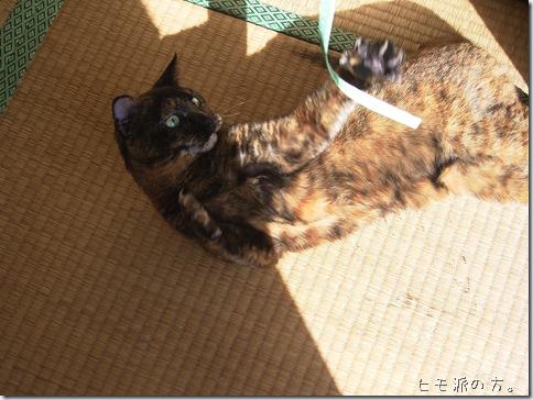 R0088512_thumb-ながい猫じゃらし。