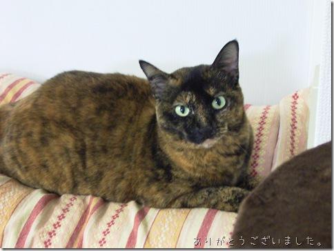 R0089618_thumb-猫の日キネン・第二回くるっピーまつり?ありがとうございましたm(_ _)m