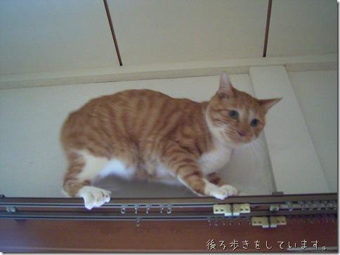 R0091369_thumb-更に試作/ちゃっピーの大冒険