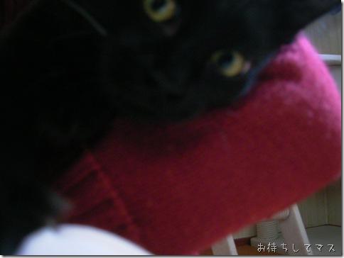 R0091630_thumb-猫の家の猫の日2011 くるっピー祭り
