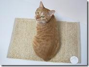 R00983190001_thumb-特価で綿マット類・猫織柄ブランケット入荷。