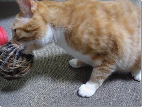 R0103193_thumb-ウチの猫ズ meets またたびボール