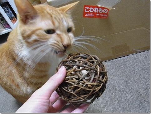R0103247_thumb-ウチの猫ズ meets またたびボール