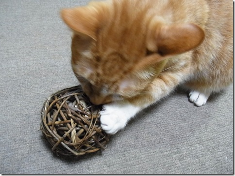 R0103278_thumb-ウチの猫ズ meets またたびボール