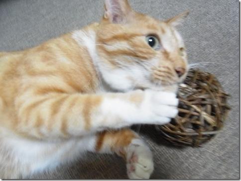 R0103315_thumb-ウチの猫ズ meets またたびボール