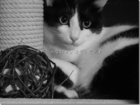 R0103361_thumb-ウチの猫ズ meets またたびボール