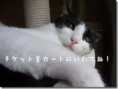 R010468700010001-秋のおしゃれセール