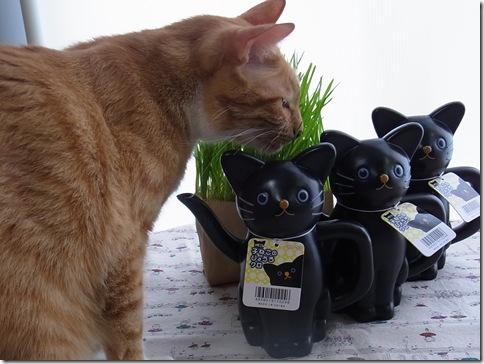 R0106434_thumb-アウトレット★白猫黒猫じょうろ