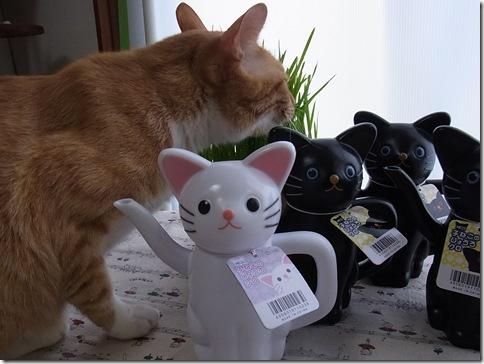 R0106479_thumb-アウトレット★白猫黒猫じょうろ