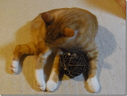 R0107845_thumb-ありがとうございました♪/茶色の茶色いまたたびボール