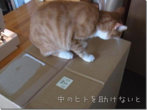 R0109002_thumb-茶色マンと大きい箱。