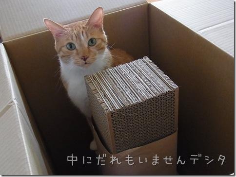 R0109015_thumb-茶色マンと大きい箱。