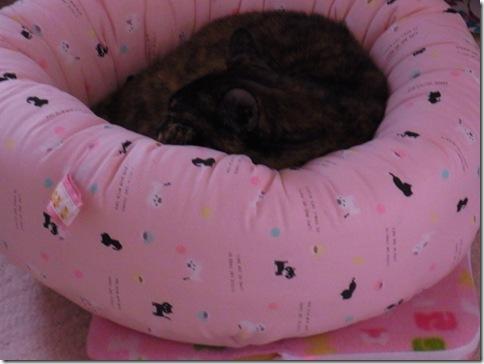 R0109083_thumb-小さすぎるベッド人気復活/シマシマな空。