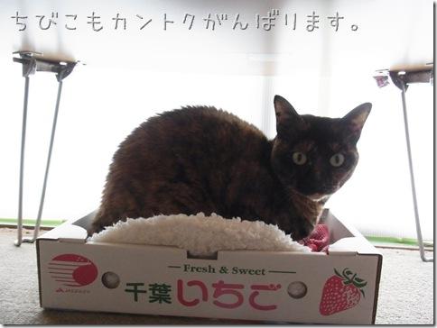 R0109731_thumb-猫の家6周年。